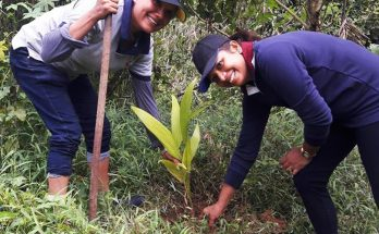 Rathnapura Tree Planting