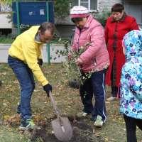 Волонтер тура Доброй Воли, Дмитрий, готовит ямку под посадку дерева.Челябинск.