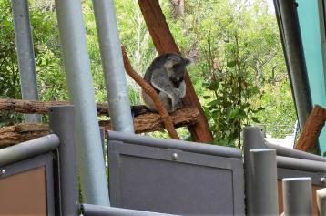 Koala Ścieżki Mojego Świata