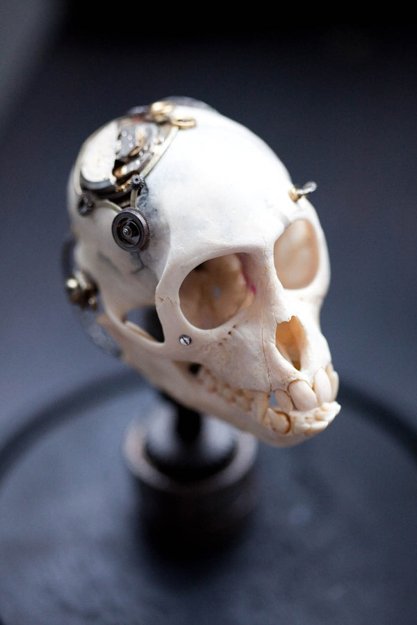 543381265605903 thumb Extreme Steampunk Beyond the Grave Terminal Techno Taxidermy