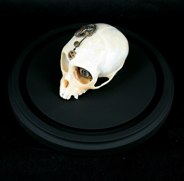 543381269294819 thumb Extreme Steampunk Beyond the Grave Terminal Techno Taxidermy