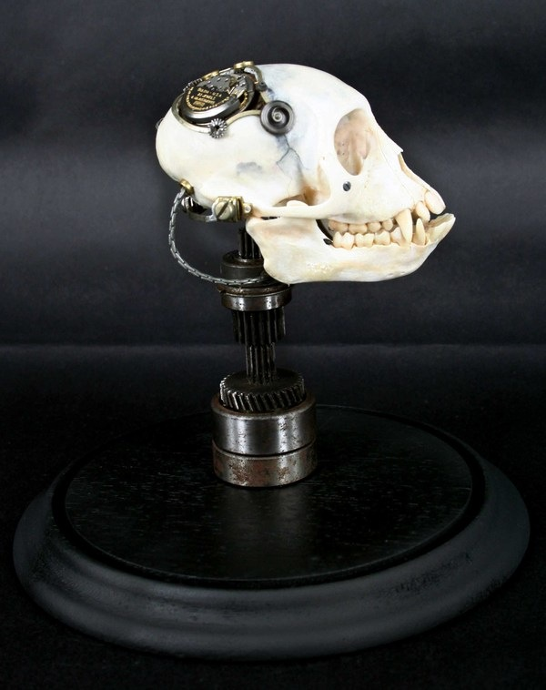543381269296203 thumb Extreme Steampunk Beyond the Grave Terminal Techno Taxidermy