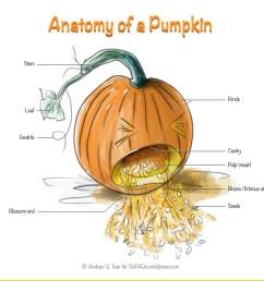 diagram pumpkin plant wiring diagram centre anatomy of a pumpkin scifaqsdiagram pumpkin plant 16 [ 1579 x 1184 Pixel ]