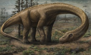 Artist's rendition of the Dreadnoughtus schrani, by Jennifer Hall