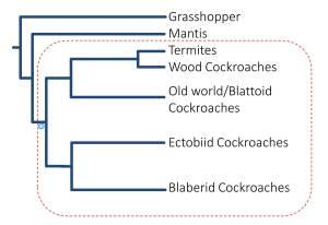 phylogeny 3