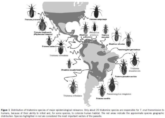 Kissing bug species relevant to Trypanosoma cruzi transmission and their ranges. From Gourbiere et al. 2012