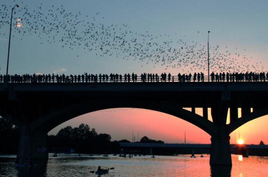 Bats emerging from the Congress Avenue Bridge in Austen, Texas. from: https://cache.graphicslib.viator.com/graphicslib/thumbs674x446/6468/SITours/bat-bridge-kayak-tour-in-austin-in-austin-157677.jpg