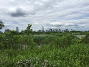 An abandoned brownfield at Liberty State Park, Jersey City, NJ(Photo credit: https://www.geocaching.com/geocache/GC2RW4D_liberty-state-park-nature-interpretive-center).