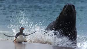 penguin & seal