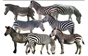 zebra-test
