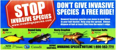 Stop-invasive-species-001-1024x447
