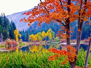 How will climate change affect fall foliage? Scientists are trying to figure out the answer. Image credit: National Geographic