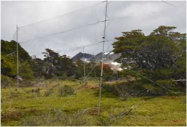 Mist net. From http://chile.unt.edu/ongoing-projects-general-information/research-areas/bird-research