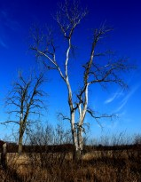 contrast tree