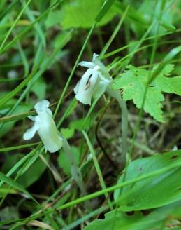 flowering fungus