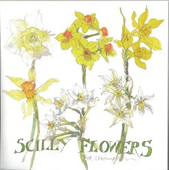 Sue Lewington's Scilly Flowers