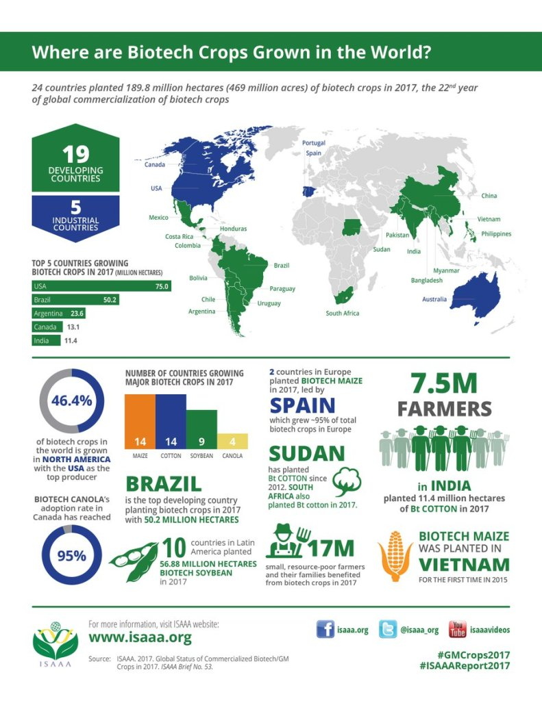infographic showing where GMOs are grown