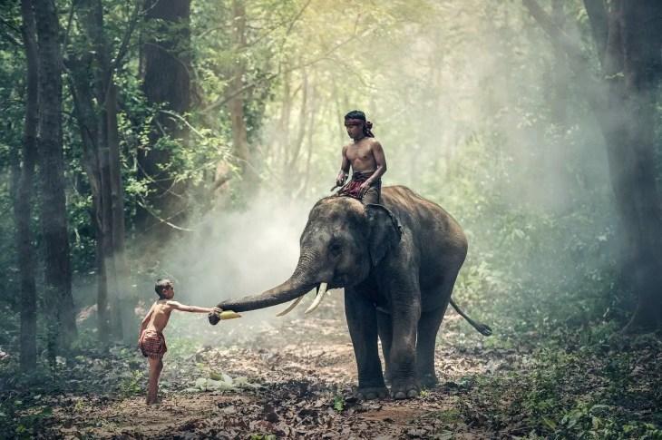 scientific monk in elephant