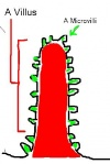 Anatomy/Digestive System - Wiki - Scioly.org