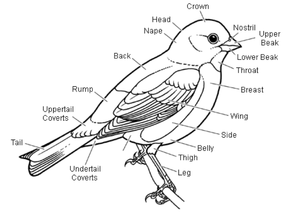 Parrot Anatomy Diagram, Parrot, Free Engine Image For User