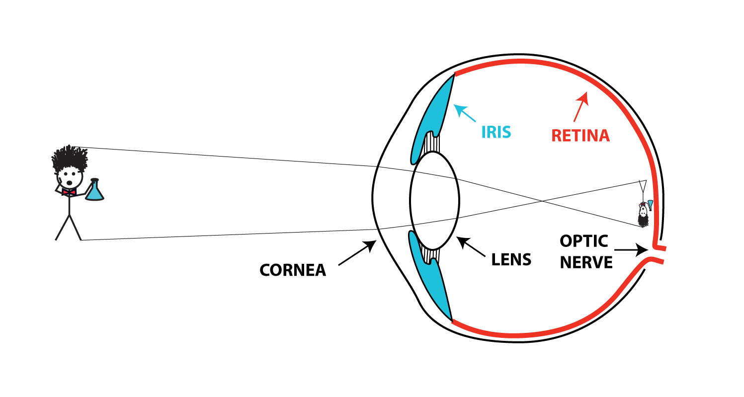 human eye diagram blind spot class 5 switch sciphile org