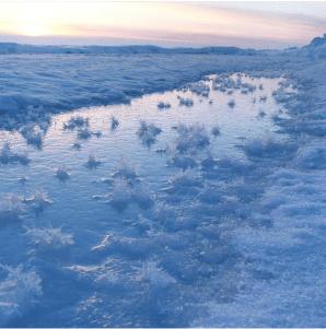 Ice Flowers