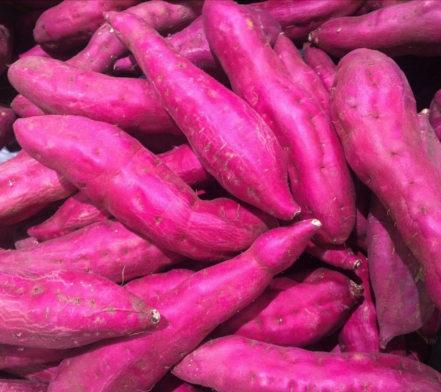 DOST, CIP, sweet potato, root crop, congress