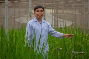 Commercialization of Golden Rice awaited.