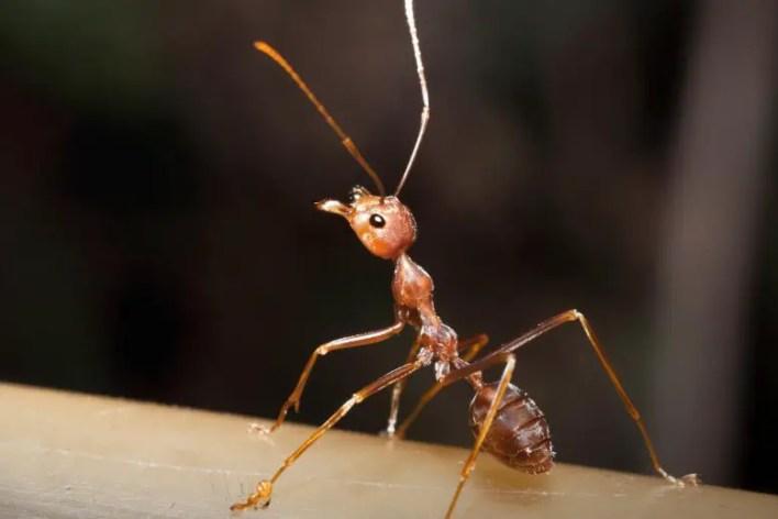 Karınca Yakın Çekim