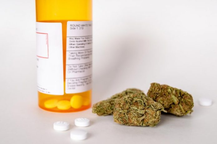 Cannabis and Prescription Opioid Pain Pills
