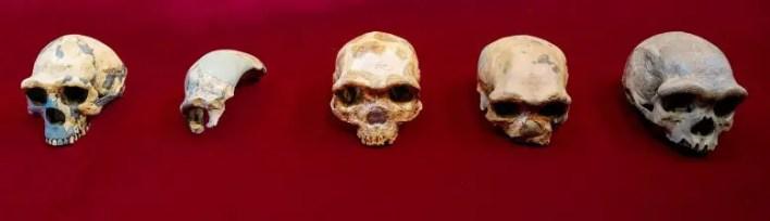 Homo Kafataslarının Karşılaştırılması