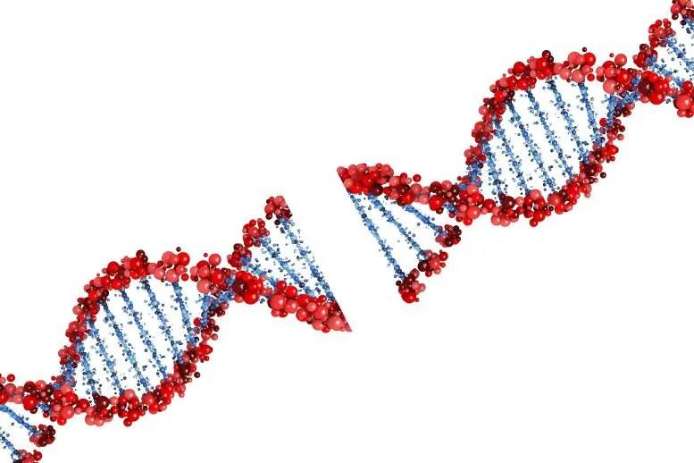 DNA Breaking