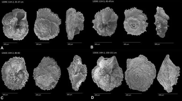 Foraminifera Samples Scanning Electron Microscopy