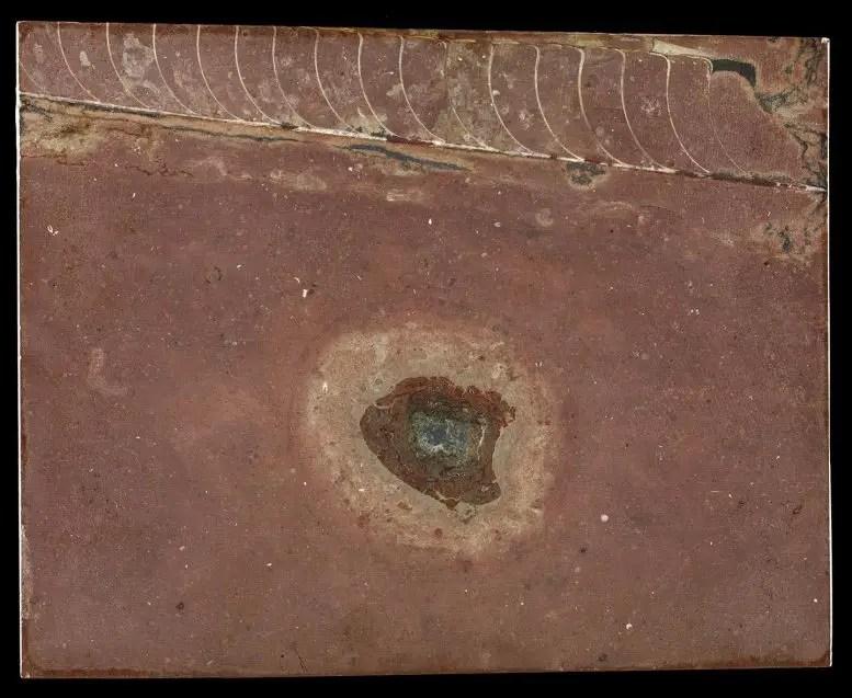 Fossil Meteorite