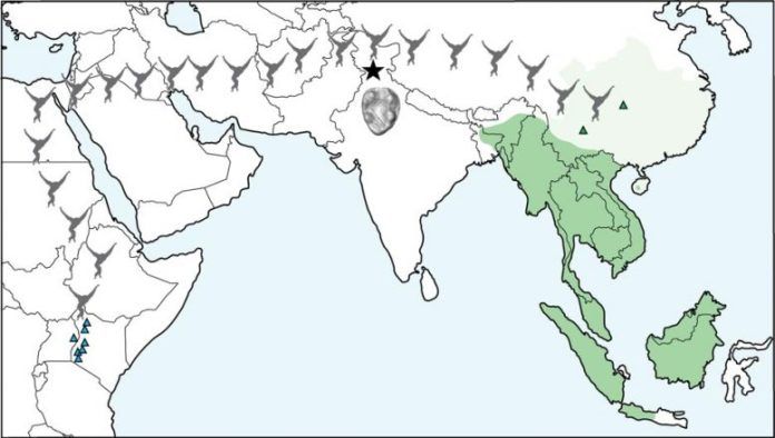 Gibbon Migration Map