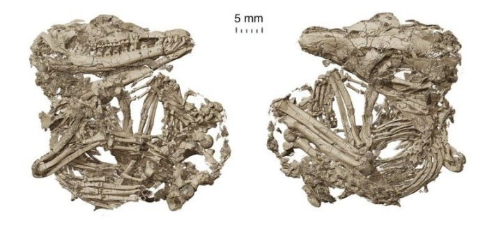 Holotype Origolestes lii