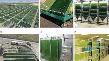 Industrial Scale Micro-Algal Bioreactors