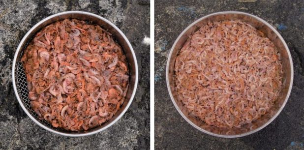 Krill sampled from penguin stomachs