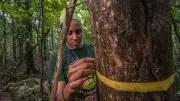 Measuring Tree Diameters Panama