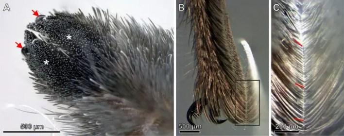 Örümcek Kıllarının Mikroskop Görüntüleri