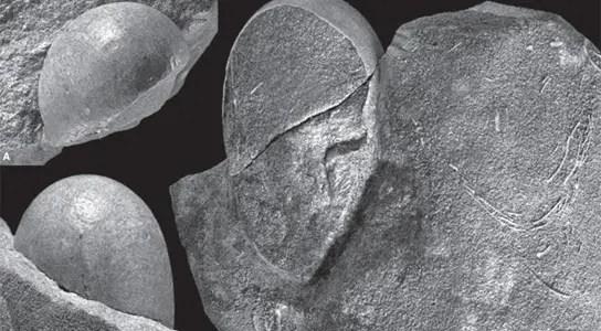 Sankofa-pyrenaica-eggs