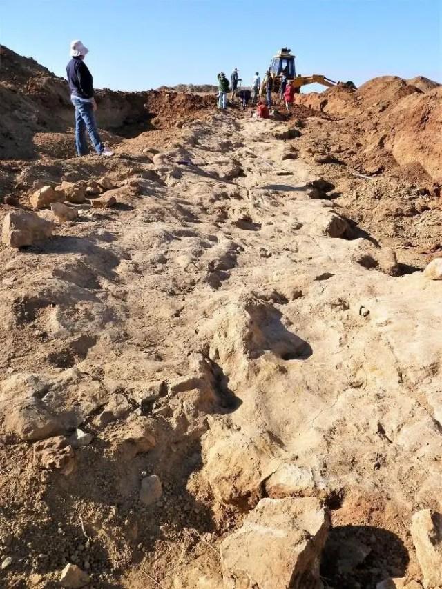 Sauropod Trample Zone