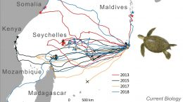 Sea Turtle Travel Routes