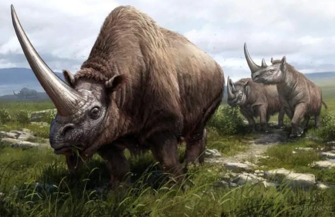 Three Extinct Rhinoceros Species