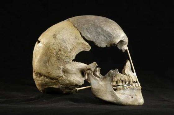 Zlatý Kůň Human skull