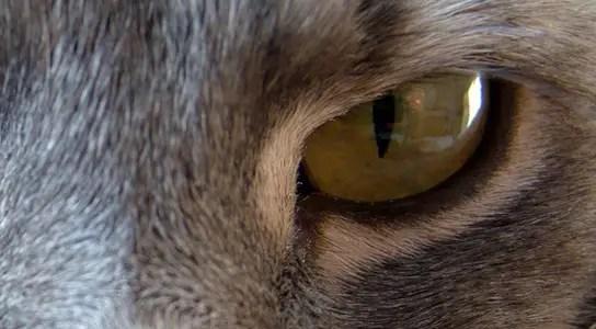 cat-harbors-ndm-1
