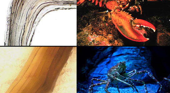 crustaceans-age-bands