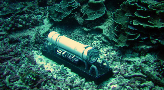 deep-ocean-floor-fungi