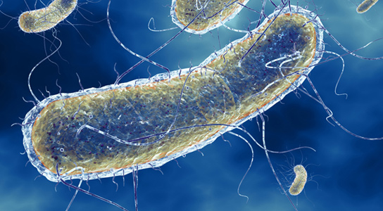 escherichia-coli-blue