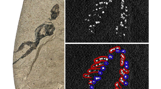 X-Rays Reveal More of Fossil Record